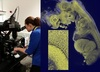 Ground Breaking 3D Imaging of Biomedical Samples