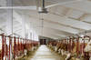 Agricultural Fans, Big Ceiling Fans for Dairy Sheds, Poulty Farms